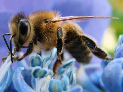 Пчеломоры куплю пчел в Тюменской области