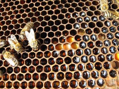 Пчелопродукция в борьбе с анорексией