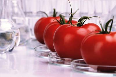 Российские ученые создали прибор для определения ГМО в домашних условиях