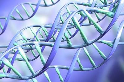Люди чаще выбирают в качестве супруга человека со схожей ДНК