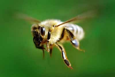 Молодежная мода на наркотики и пчелы
