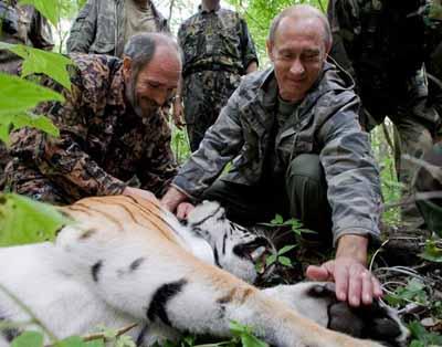 В Китае ищут выпущенного на волю Путиным тигра Кузи